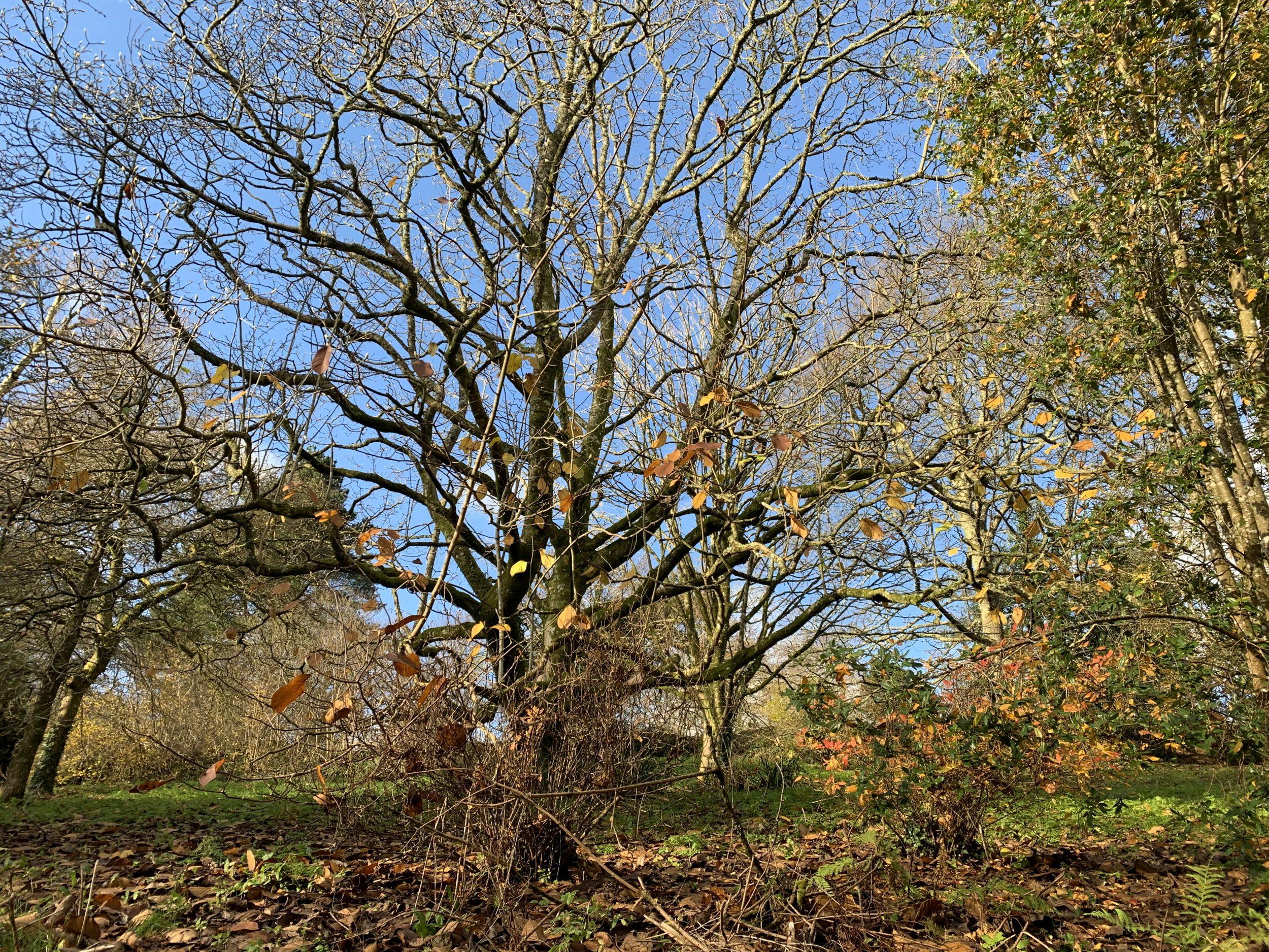 Autumnal trees at Cotehele