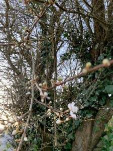 Early blossom on the tree in our entrance